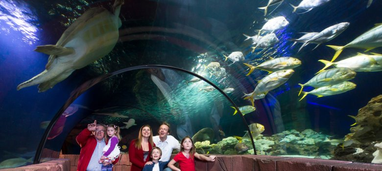 Oceantunnel im Sealife Speyer